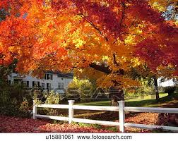 stock photography groton ma massachusetts autumn colorful