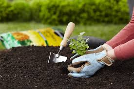 10 top gardening tips for beginners miracle gro