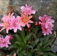 88 best rock gardens images on pinterest gardening rock garden