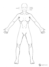 How To Draw Female Anatomy Female Anatomy Drawing Model Front By Gourmandhast On Deviantart