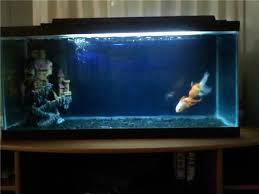 Aquarium Decor Ideas My Fish Tank Need Ideas Tropical Fish Keeping Aquarium