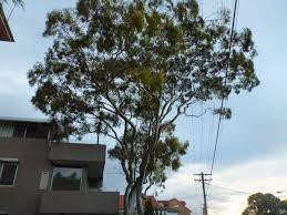 australian native plants guide australian native trees gardening with angus