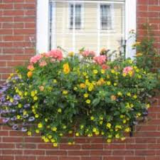 Flower Boxes That Thrive In by Flower Boxes That Thrive In The Sun Window Box Flowers Window