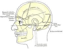 Behind The Ear Anatomy Mastoiditis Wikipedia