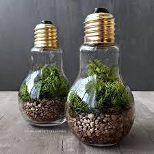 cute plant light bulb plant terraium cute office plants popsugar career