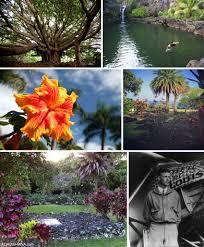 Hawaii vegetaion images Laulima farm certified organic sanctuary in kipahulu valley jpg