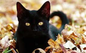 cat halloween wallpaper kitten wallpapers the wallpaper