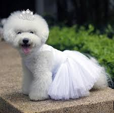 Dog Wedding Dress Aliexpress Com Buy White Dog Wedding Dress With Necklace Puppy