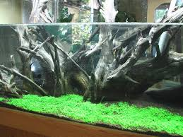 Aquascaping Plants Dsm Dry Start Method For Starting A New Planted Tank