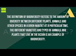 what is an example of biological diversity youtube