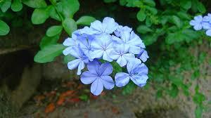 花と心模様 tkokoromoyou twitter