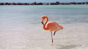 flamingo standing ngsversion 1396530994611 jpg