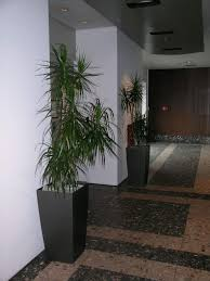 plant craft indoor plant hire commercial garden maintenance and