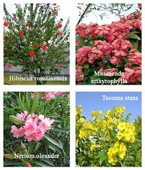 horticulture landscaping types of garden