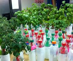 Bottle Garden Ideas Hydroponics For Beginners This Water Bottle Garden Is