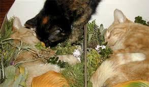 cat caskets johnson county humane society bereavement grief when a pet dies