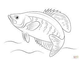 white crappie coloring page free printable coloring pages