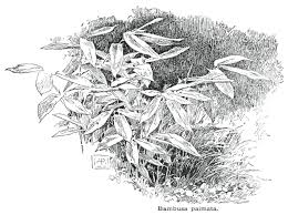 bamboo a multipurpose agroforestry crop u2013 small farmer u0027s journal