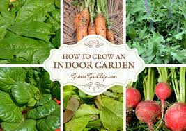 Winter Indoor Garden - how to grow an indoor garden