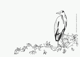 bird coloring pictures