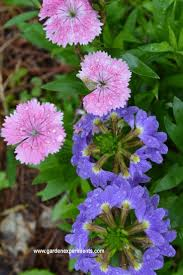 68 best great plant color combinations images on pinterest