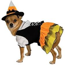 candy corn witch dog costume cute pet halloween fancy dress ebay
