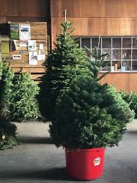 christmas tree prices christmas trees prices start at 25 forever colors