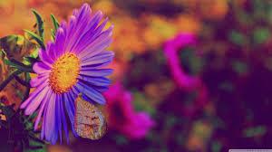 flower touch sunset nature flower purple beautiful butterfly