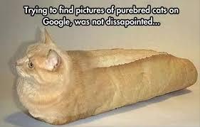 Loaf Meme - loaf of bread meme of best of the funny meme