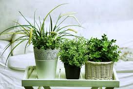 plante verte chambre à coucher 5 plantes d intérieur pour décorer la chambre à coucher et nous