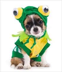 Halloween Costumes For Dogs Více Než 25 Nejlepších Nápadů Na Pinterestu Na Téma Halloween