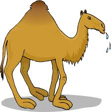 camel clipart vector pencil and in color camel clipart vector