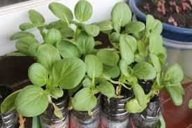cara membuat cairan hidroponik bercocok tanam yuk panduan praktis cara menanam tanaman hidroponik