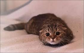 Sad Cat Meme - sad cat blank template imgflip