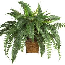 Fern Decor by Modern Home Decor Contemporary Decor See White