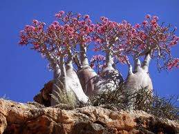 beautiful trees with forms from around the world 13 pics