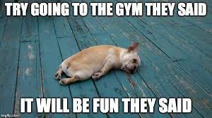 Tired Dog Meme - tired dog meme generator imgflip