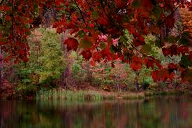 autumun fall tree lake trees free nature pictures by