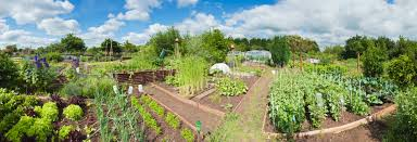 upcoming community garden planning meeting wednesday january