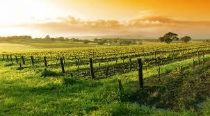 napa valley ca it u0027s wine o u0027clock somewhere a lady in napa