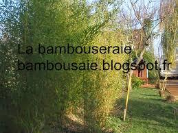 brise vue en bambou pas cher haie en bois de bambou u2013 mzaol com