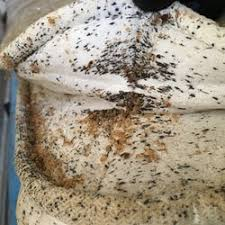 Bed Bug Exterminator Detroit Brooklyn Bed Bug Exterminator Pest Control 15th Ave
