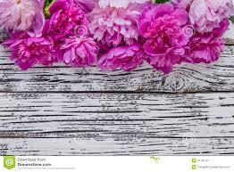 Peony Flowers Peony Flowers 01 Stock Photo Image 41782757