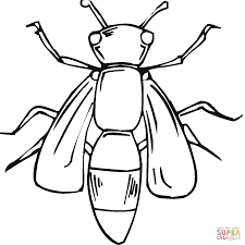 body of bee coloring page free printable coloring pages