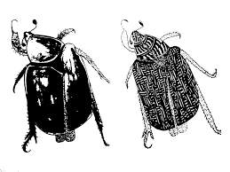 cockroach free pictures pixabay