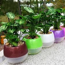 self watering containers for vegetable garden the gardens of heaven