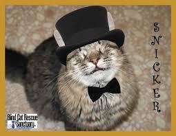 Blind Cat Sanctuary 68 Best Blind Cat Rescue U0026 Sanctuary Images On Pinterest Blind