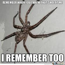 Image 325848 Misunderstood Spider Know - 8 best spider memes images on pinterest hand spinning spiders and