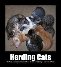 Herding Cats Meme - lolnptech org herding cats the best possible summer job for a