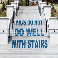 What Should You Not Do When Using A Stair Chair Pigs And Stairs A Potentially Flawed Living Arrangement Mini